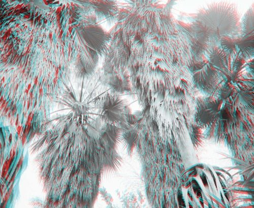 stereo photograph of palm trees, Botanical Gardens, Havana, Cuba