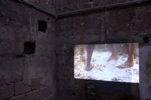videoprojection on wall