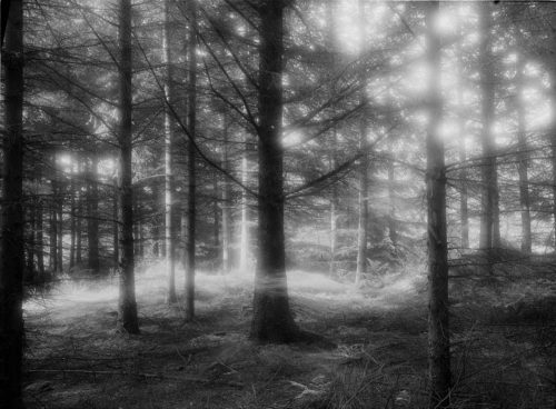 photograph of pine tree forest with light drawing, b/w